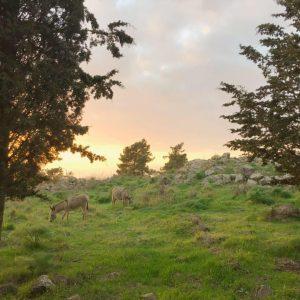 נטורה חווה אקולוגית
